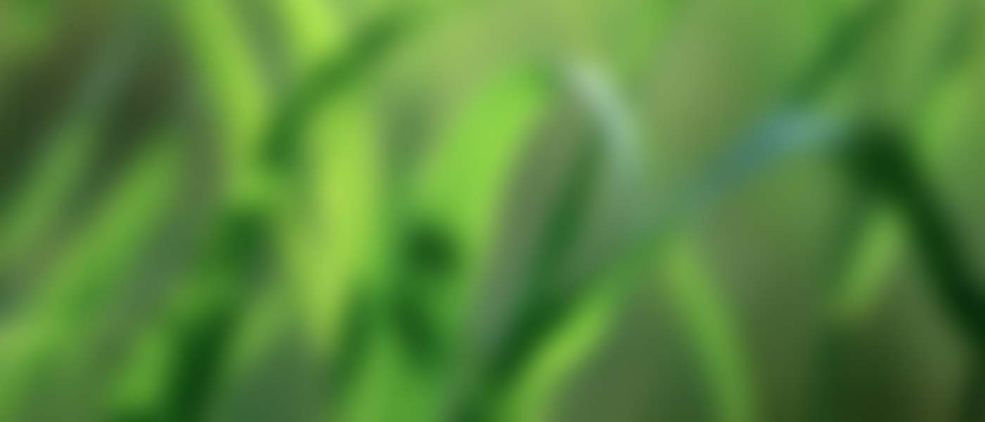 leaf-slider-blurred-bg1