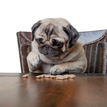 Legal Accounting - Triella Service - cute pug puppy dog sitting on chair at wooden dining table counting kibbles, being on diet